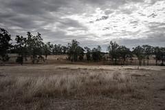 Winter Dry iii