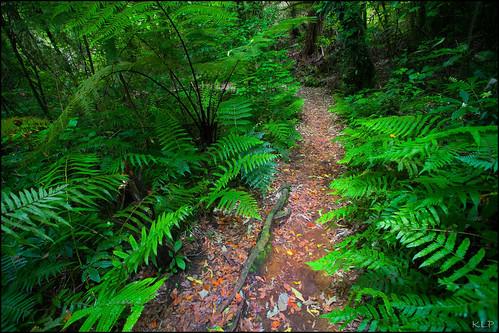 A fern path