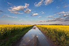 spring flowering fields
