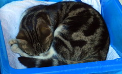 Edward sleeping in te shed.