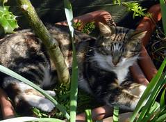 William dozing in a shady spot.