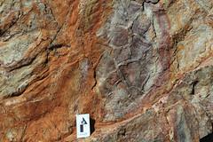 Mudcracks (ABC Range Quartzite, Neoproterozoic; Pichi Richi Pass railroad cut, South Flinders Ranges, South Australia) 6