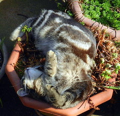 Charles sunning himself on a plant pot.