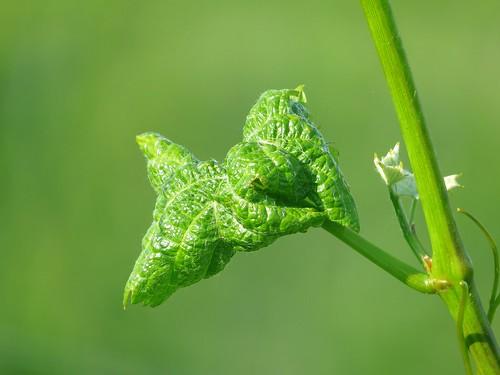 Full green Bokeh (ma pomme de Newton) !!!