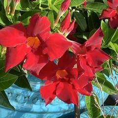 Tampa gardens
