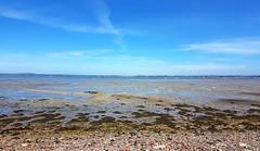 View of Langstone Harbour 8