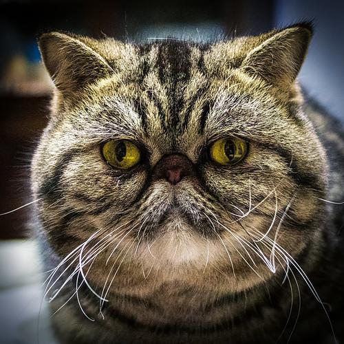 """""""Miu"""" la mia piccola gattina - """"Miu"""" my little kitten"""