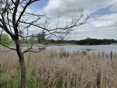 McKee Marsh 2020