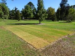 Strips of Lawn