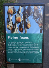 Flying Fox Information