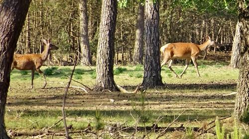 Hoge Veluwe Nationalpark, Netherlands