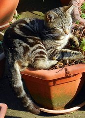 Charles sunning himself on a plant pot
