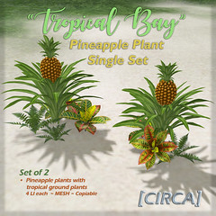 "[CIRCA]   ""Tropical Bay"" Pineapple Plant Single Set"