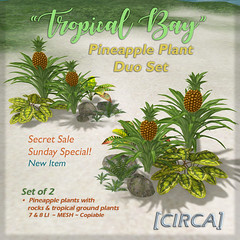"SSS Event Item | [CIRCA]   ""Tropical Bay"" Pineapple …"