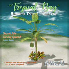 "SSS Event Item | [CIRCA]   ""Tropical Bay"" Banana Tre…"