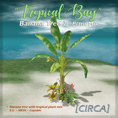 "[CIRCA]   ""Tropical Bay"" Banana Tree 2   Plant Mix"