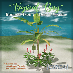 "[CIRCA]   ""Tropical Bay"" Banana Tree 1   Birds of Pa…"
