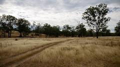 Winter Dry viii
