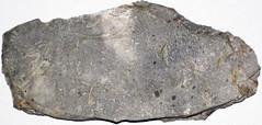 Micritic limestone (Fork Tree Limestone, Lower Cambrian; Old Sellicks Hill Road, Fleurieu Peninsula, South Australia) 2