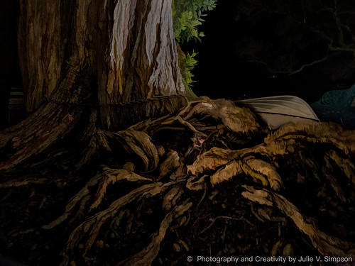 Tree roots knobbly - graphical lit