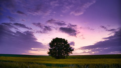 Sunset behind a lonely tree