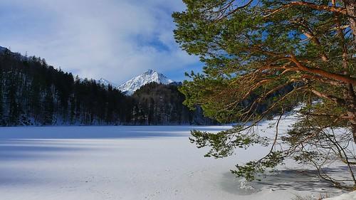 le lac des cygnes - tchaikovski