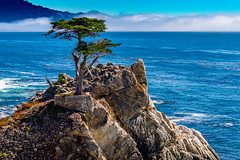 The Lone Cypress  of Pebble Beach #3