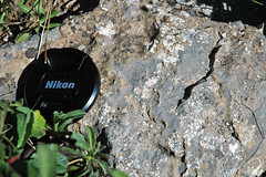Archaeocyathan limestone (Fork Tree Limestone, Lower Cambrian; Old Sellicks Hill Road, Fleurieu Peninsula, South Australia) 4