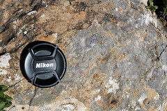 Archaeocyathan limestone (Fork Tree Limestone, Lower Cambrian; Old Sellicks Hill Road, Fleurieu Peninsula, South Australia) 3