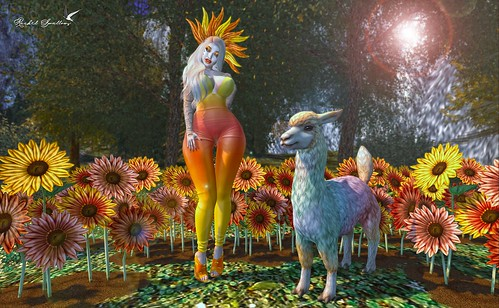 LAMAS AND SUNFLOWERS