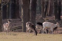 Falknerei im Wildpark