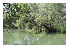 Forêt du Rhin