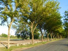 Loire, boulodrome et route bordée d'arbres (1)