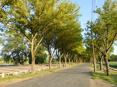 Loire, boulodrome et route bordée d'arbres (2)