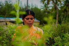 Rural Indian Women farming in flower field