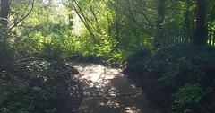 Meadowbrook Pond path