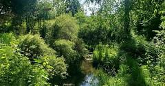 Meadowbrook Pond area's Thornton Creek