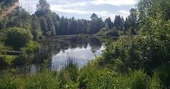 Meadowbrook Pond 3