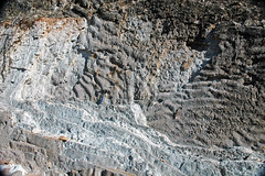 Burrowed & rippled sandstone (Parachilna Formation, Lower Cambrian; Three Sisters Range, South Australia) 4