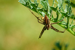 Spider ...