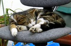 Edward sleeping on an old office chair.