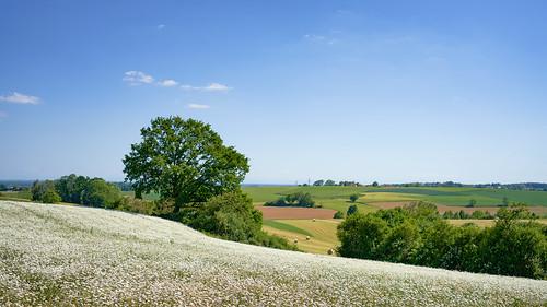 A Bavarian Dream in White