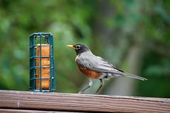 DSC03215-birds