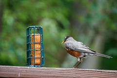 DSC03214-birds