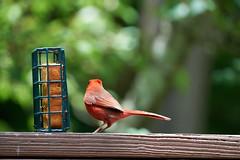 DSC03207-birds