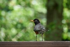 DSC03198-birds