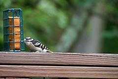 DSC03186-birds