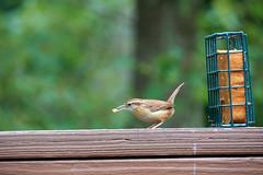 DSC03176-birds