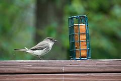 DSC03174-birds