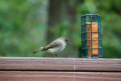 DSC03170-birds